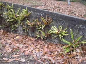 richmond-park-foraging-mushrooms-etc-004