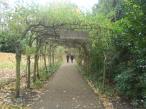 richmond-park-foraging-mushrooms-etc-005