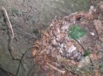 richmond-park-foraging-mushrooms-etc-012